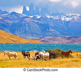 Beautiful cliffs Torres del Paine - Beautiful thoroughbred...
