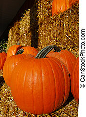 Pumpkins and display on bales of hay