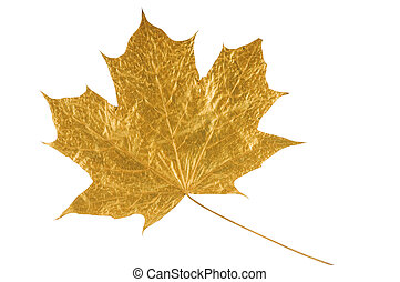 golden maple tree leaf isolated on white (with clipping...