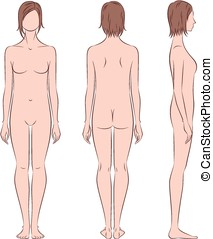 Female silhouette - Vector illustration of womens figure...