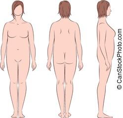 Female silhouette - Vector illustration of women's figure....