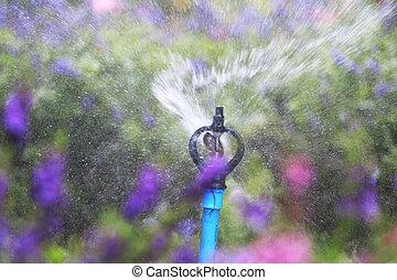 Close up water sprinkler spray watering.
