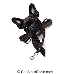 dog leather leash - french bulldog dog waiting to go for a...