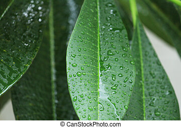rain drop on green leaves. - Close up falling rain drop on...