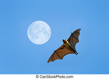 Flying fox bat - Flying fox on blue sky