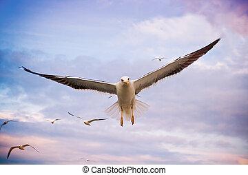 Flying seagulls in sunset sky