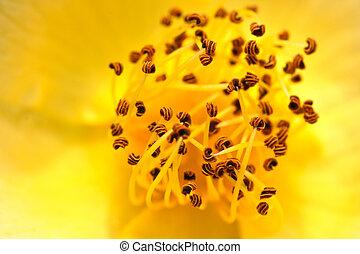 Carpel flower - Carpel of cananga flower