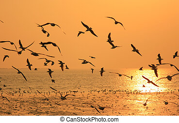 Flying birds against orange sunset