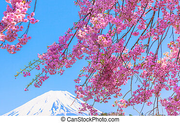 Mt Fuji under Weeping cherry blosso - Mount Fuji under...