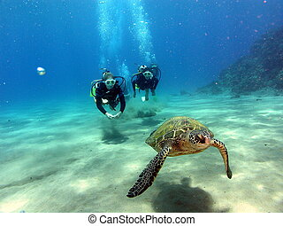 What is it with you guys - Two divers and Green sea turtle