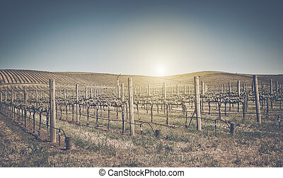 Beautiful Vineyard in Napa Valley with retro film style...