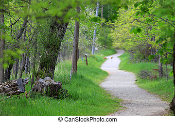 Nature path - Winding path in the nature park