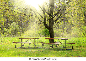 Beautiful spring scene - Two picnic tables in the park in...