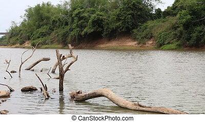dead tree wood in river, HD Clip.