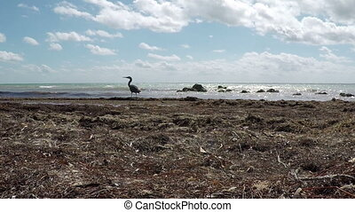 Bird on natural Florida Beach - Florida Keys Bird on natural...