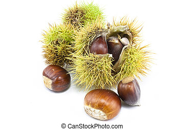 chestnuts in case - chestnuts in and out of there cases