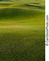 Green grass background - Green grass background,rolling...