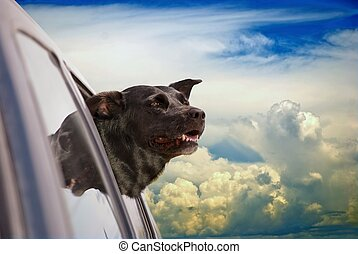 Dog Heaven 1 - Happy dog going for a car ride