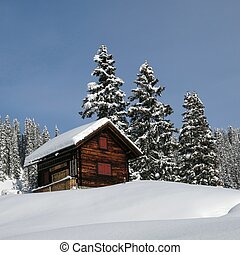 Little chalet and firs, winter scene in Braunwald