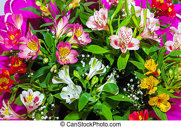 image Floral background from plants Alstroemeria - a mage...