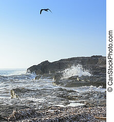 Seagull Choppy Seas in Ses Covetes, Mallorca, Balearic...