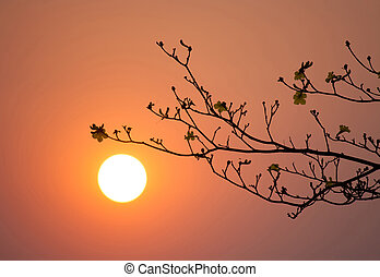 branch silhouette sunset - branch silhouette at sunset time
