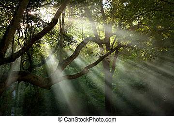 tree sunray in the forest