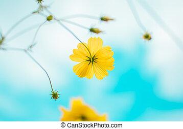 Beautiful daisy gerbera flowers