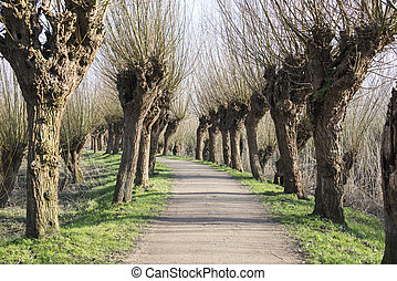 path in nature with willows - walking path in dutch nature...