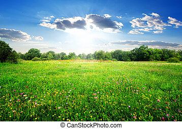 Field flowers on a beautiful spring meadow