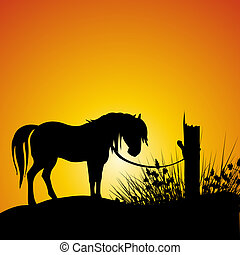silhouette view of a horse tied to a branch - silhouette...
