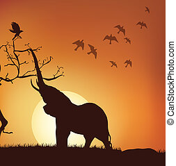 silhouette view of elephant pulling branches, sunrise,sunset