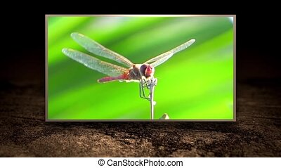 Insects world, edited sequence - diverse insects montage...