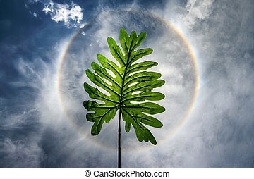 leaf in sun halo background on summer