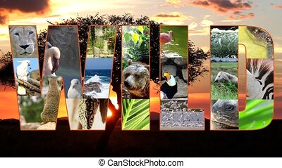 wild collage - wildlife, composition
