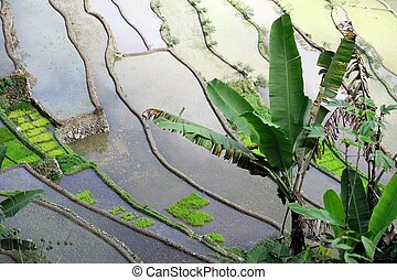 UNESCO Rice Terraces in Batad, Philippines - Famous UNESCO...