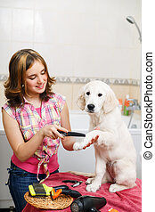Girl grooming of her dog at home - Girl owner is combing out...