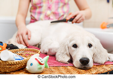 Girl grooming of his dog at home - Girl owner is combing out...