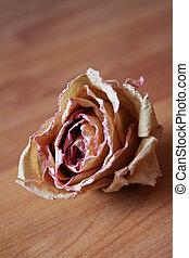 Herbarium Rose