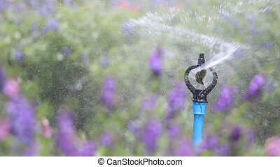 water sprinkler spray watering - Close up water sprinkler...
