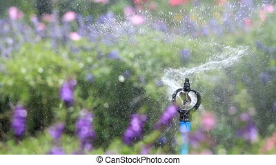 water sprinkler spray watering