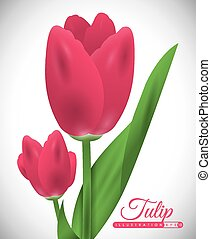 tulip flower design, vector illustration eps10 graphic