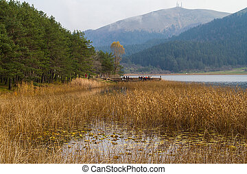 Abant Lake with Reeds and Trees