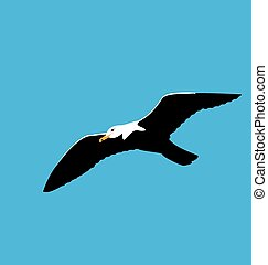 Soaring seagull in blue sky, seabird isolated on blue background
