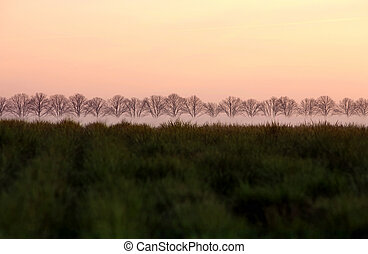 Landscape - Row of Trees in a field