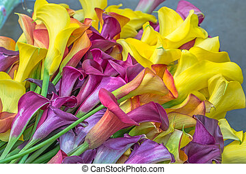 calla lily - Multicolored calla lily flower, floral pattern,...