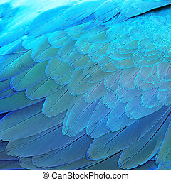 Blue and Gold Macaw feathers - Bird feathers, Blue and Gold...