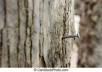 emphasize - a nail is hammered in a tree trunk