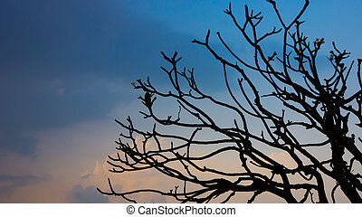 tree branch sillouette with evening blue sky