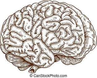engraving brain - Vector engraving antique illustration of...
